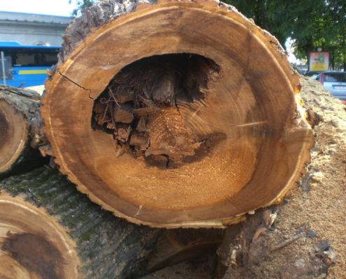 carie-del-legno