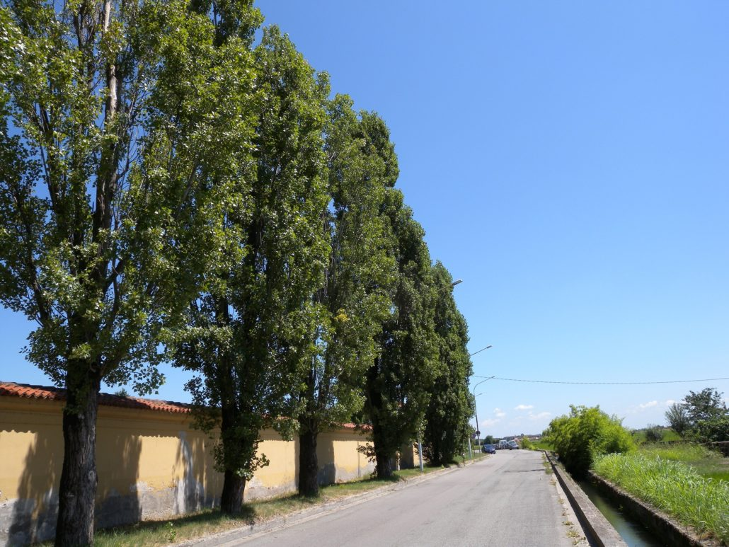alberi ad alto fusto codice civile